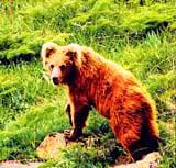 Казахстана природа казахстана