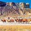 Устюртский Национальный Биосферный заповедник. Природа Казахстана